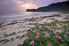 Wild beach flowers
