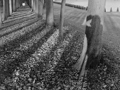 Magnum Photos - Stuart Franklin
