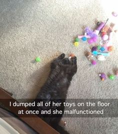 Excellent > Funny Cat Photos With Captions ;D