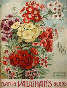 Vaughan's seeds illustrated / Vaughan's Seed Company :: Nursery and Seed Catalogs