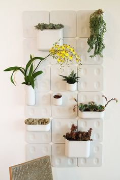 Vertical low-maintenance houseplants are a great solution for a busy entrepreneur.