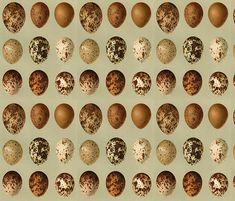 Wild Bird Eggs fabric by zephyrus_books on Spoonflower - custom fabric