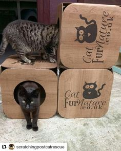 #Repost @scratchingpostcatrescue (@get_repost)  Two of our feral cats playing with their new boxes from @catfurnature We have a large colony of  ferals we are always trying to rehome. If you have a farm/stables/large garden and can offer them regular meals shelter and room to roam please get in touch via our website http://ift.tt/1gFf3FM or our helpline 01992 626110 #feralcats #feralcatsofinstagram #adoptdontshop #adoptacat #catrescue #rescuecats #catshelter #sheltercats #lifesbetterwithacat…