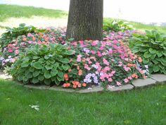 impatiens & hostas. Front yard landscaping.