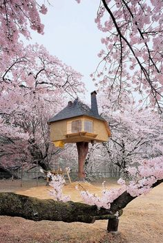 Treehouse in Yamanashi, Japan