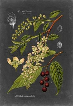 Midnight Botanical II Giclee Print Poster by Vision Studio Online On Sale at Wall Art Store – Posters-Print.com