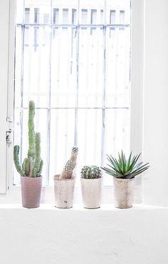 Cacti at Via Tortona showrooms during Milan's Design Week | Salone del Mobile / Urbanjunglebloggers / http://passionshake.com
