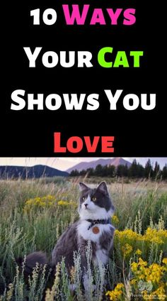 10 Ways Your Cat Shows You Love – #cutecat #instacats #cutecats #petstagram #kittensofinstagram #catloversclub #petsofinstagram #dog #ilovecats #catslife #features #catsoftheday #kittycat #catsoftheworld #instagood #photooftheday #katze #catsofig #caturday #catsofinsta #catsofworld #instagramcats #katzen #gatto #chat #gatosdeinstagram #catslover #photography #nature #blackcat – ANIMALS LOVELY I Love Cats, Cute Cats, Funny Cats, Cat Crying, Funny Cat Videos, Cat Tree, Cat Gif, Beautiful Cats, Cat Lovers