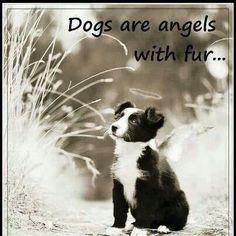 Angel with fur...