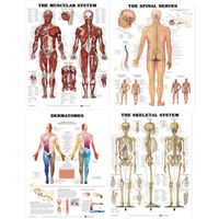 Save 10% when you buy this value pack of four bestselling laminated chart titles by the #Anatomical Chart Company, ideal for #physiotherapy students.