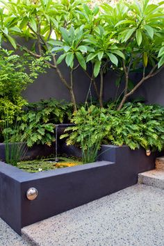 Melville courtyards tropical-landscape; Love this corner stair pond and the Frangipani tree