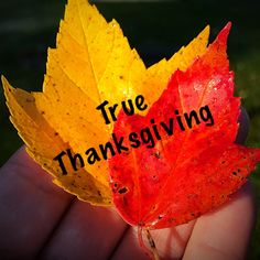 What is true Thanksgiving? I am humbled by Jesus. He has come through so many times for my family over the years. He has lessons that...