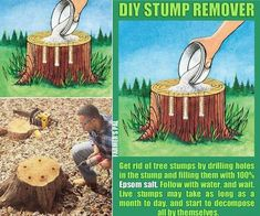 Gardens Discover Outdoors Discover Gardens Discover Tree Stump Remover using Epsom Salt and Drilling Holes. Kill Tree Stump, Tree Stump Killer, Backyard Projects, Garden Projects, Weed Killer Homemade, Stump Removal, Begonia, Lawn Care, Lawn And Garden