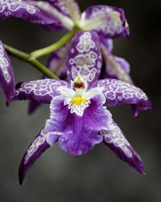 Purple Orchid Beautiful gorgeous pretty flowers
