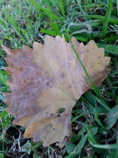 Hojas c de otoño