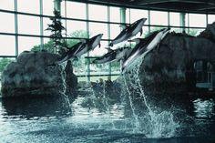 Shedd Aquarium - come visit the 22,000 animals living in this National Historic Landmark!