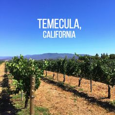 Temecula travel Guide — SoCal wine country!