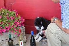 Bella knows an important part of Wine Tasting is to Sniff the wine. She says Initially you should hold the glass a few inches from your nose. Then let your nose go into the glass. Mmmm it's a Dog's Life...  Sniff the wine. Initially you should hold the glass a few inches from your nose. Then let your nose go into the glass. Mmmm its a dog's life!  http://www.facebook.com/EuropaVillage