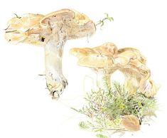 Vielä ehdit metsään: Näin löydät sienet Moose Art, Lion Sculpture, Statue, Fungi, Animals, Animales, Mushrooms, Animaux, Animal
