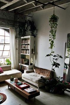 Steal This Look: Isabel Wilson's House Plants