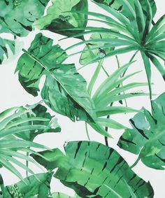 Banana Leaf Palm Tropical Wallpaper #tropicalwall #theblockwallpaper #palmleafwallpaper #fernwallpaper