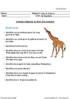 PrimaryLeap.co.uk - Animals adapting to their environment - Giraffes Worksheet