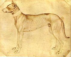 Risultati immagini per pisanello cane