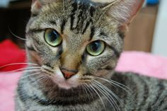 cats | Why Cats Bury Their Droppings | A Moment of Science - Indiana Public ...