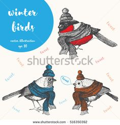 Christmas bird set.  Xmas cute birds dressed in scarf and cap. Hand-drawn vector illustration