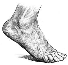 foot and ankle anatomy for artists   Foot Anatomy - The Dorsum of the Foot #2