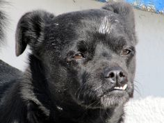 Labrador Retriever, Greece, Dogs, Animals, Labrador Retrievers, Greece Country, Animales, Animaux, Animal Memes