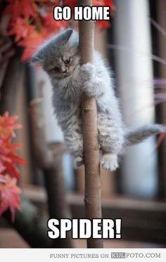 Go home, spider! Dog Cat, Canning, Cats, Animals, Gatos, Animales, Animaux, Cat, Animal