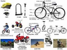 English lesson about cycles and the different types that are more common.