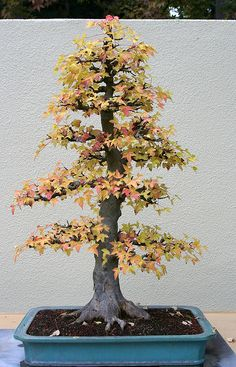 Bonsai Collection by @Robyn Wood, via Flickr