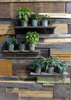 Flower pots sitting on shelves cantilevered onto the reclaimed wood siding. So unique! #gardening #flowers #plants