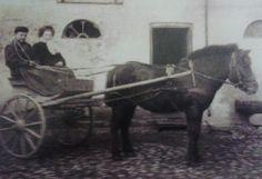 De første islandsheste i Danmark. First icelandic horses in Denmark