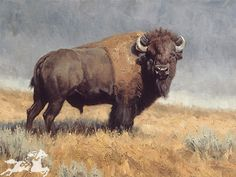 Just colors less washed out and a little bit closer up. The Plainsman Skidmore Bison Buffalo Wildlife Animals Signed Numbered Printed TAGS: Buffalo,Bison,Animals,Wildlife, Wildlife Paintings, Wildlife Art, Animal Paintings, Art Paintings, Buffalo S, Buffalo Animal, American Bison, American Animals, Native American Art