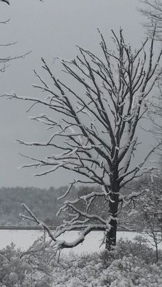 Snow painted tree