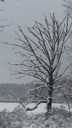 Snow painted tree