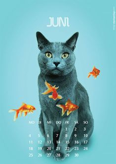 Clarinha (from Poland) and Tubarão (from Russia), are two cats that met in the bohemian Berlin and have a great lifestyle together. Their best moments were captured by their friend Otávio Santiago in this funny calendar. These cats are having amazing adventures together, aren't they?  Otávio Santi
