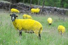 Sheep - Google Search