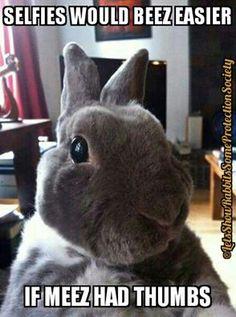 Bunny Selfy (10/12/16) https://www.facebook.com/photo.php?fbid=1285093251521325&set=gm.1006828086111455&type=3&theater