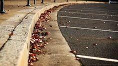 Risultati immagini per foglie in strada
