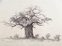 baobab sketch - Google Search