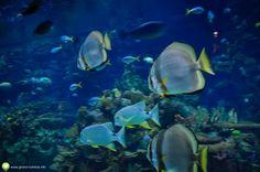 Poze de la Oceanograful din Valencia Valencia, City Break, Pets, Animals, Animales, Animaux, Animal, Animais, Animals And Pets