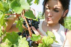 San Gimignano, le aziende agricole che offrono servizi alla persona https://www.facebook.com/baccano.san.gimignano?ref=hl … #sangimignano