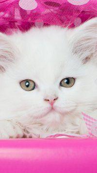 Animal Cat Cats Mobile Wallpaper Animales Graciosos