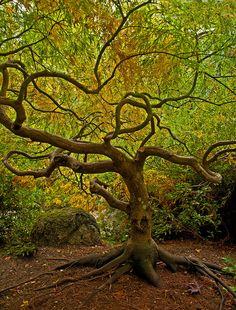Japanese Garden. Ashland OR.