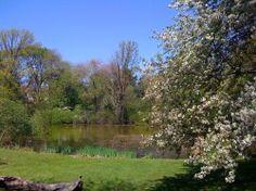 hall's pond sanctuary, brookline