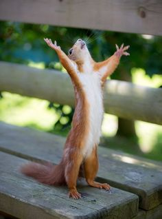 Are you looking for a super adorable squirrel meme? Make somebody's day that much brighter with a funny squirrel meme. Animal Memes, Funny Animals, Cute Animals, Animal Captions, Animal Humor, Smiling Animals, Baby Animals, Animal Quotes, Funniest Animals
